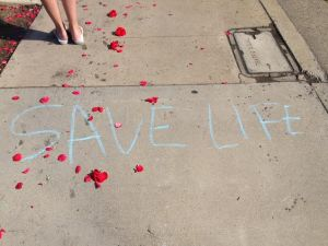 rose petals   save life in chalk
