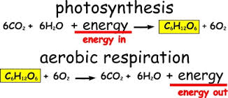 photosynthesis and aerobic respiration