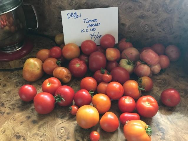 dbmeru tomatoes july 7 18 15 pounds.jpg